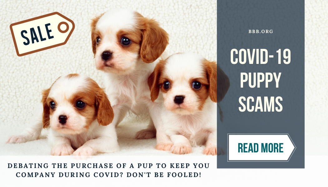 Covid-19 puppy scams